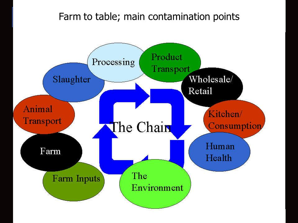 Farm to table; main contamination points