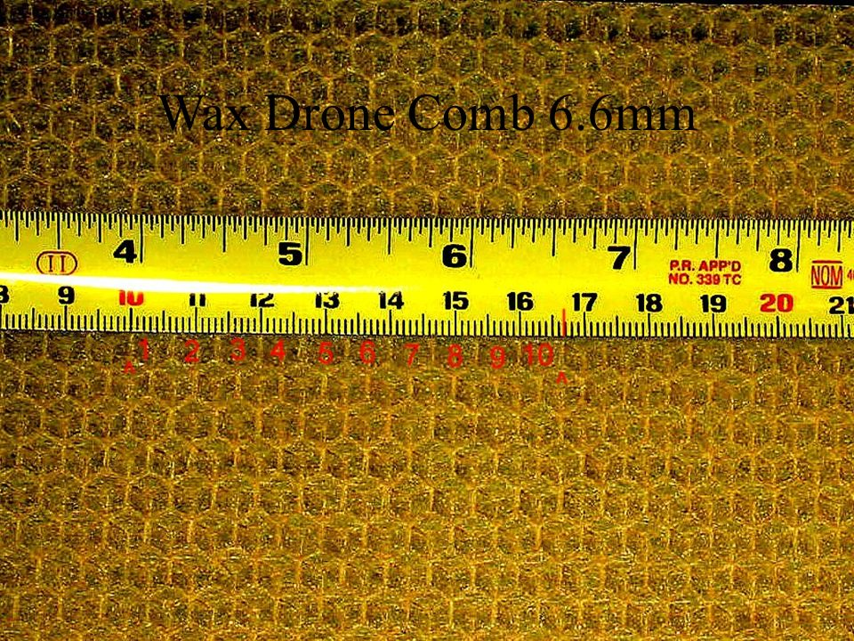 Wax Drone Comb 6.6mm