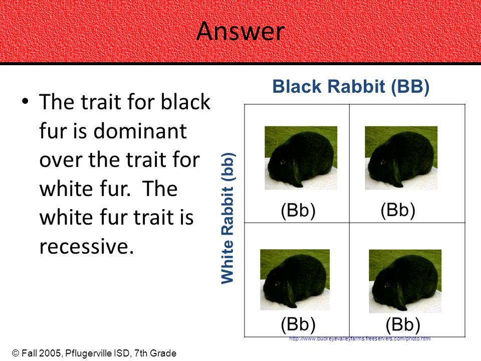 Answer Black Rabbit (BB) The trait for black fur is dominant over the trait for white fur. The white fur trait is recessive.