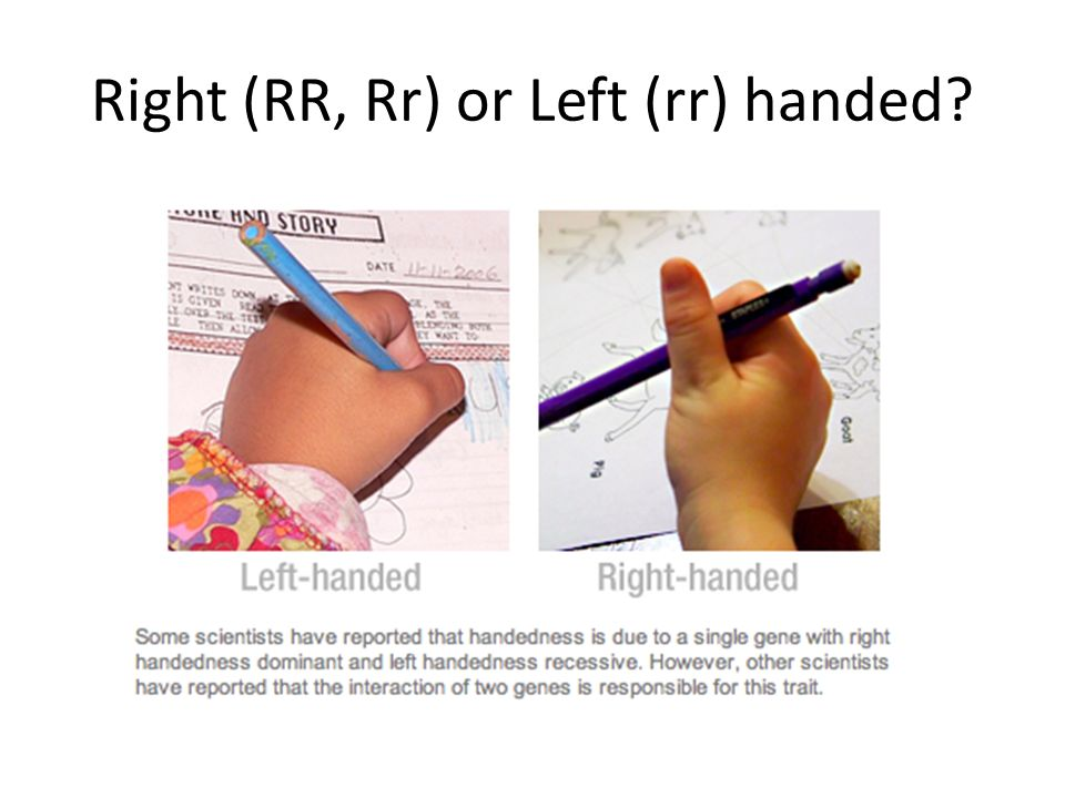 Right (RR, Rr) or Left (rr) handed