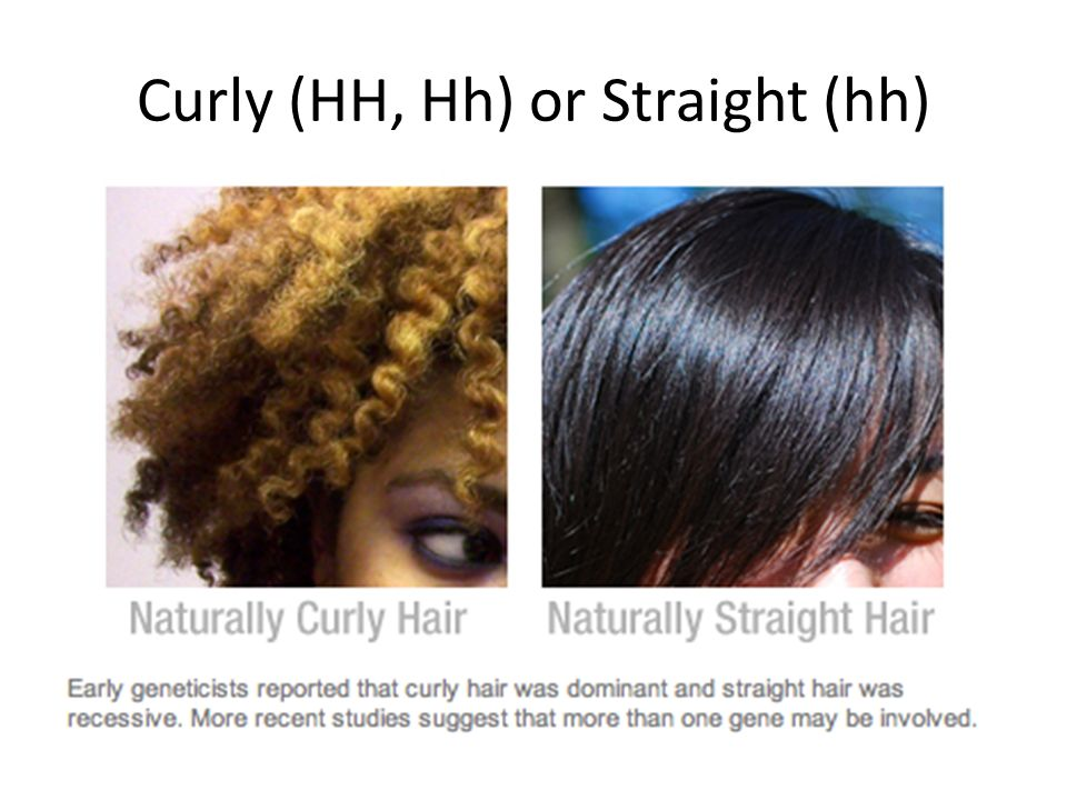 Curly (HH, Hh) or Straight (hh)