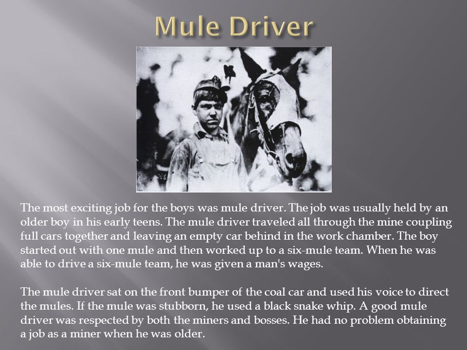Mule Driver