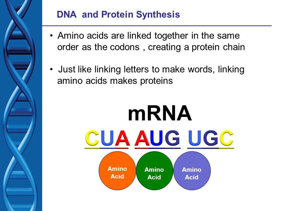 mRNA CUA AUG UGC DNA and Protein Synthesis