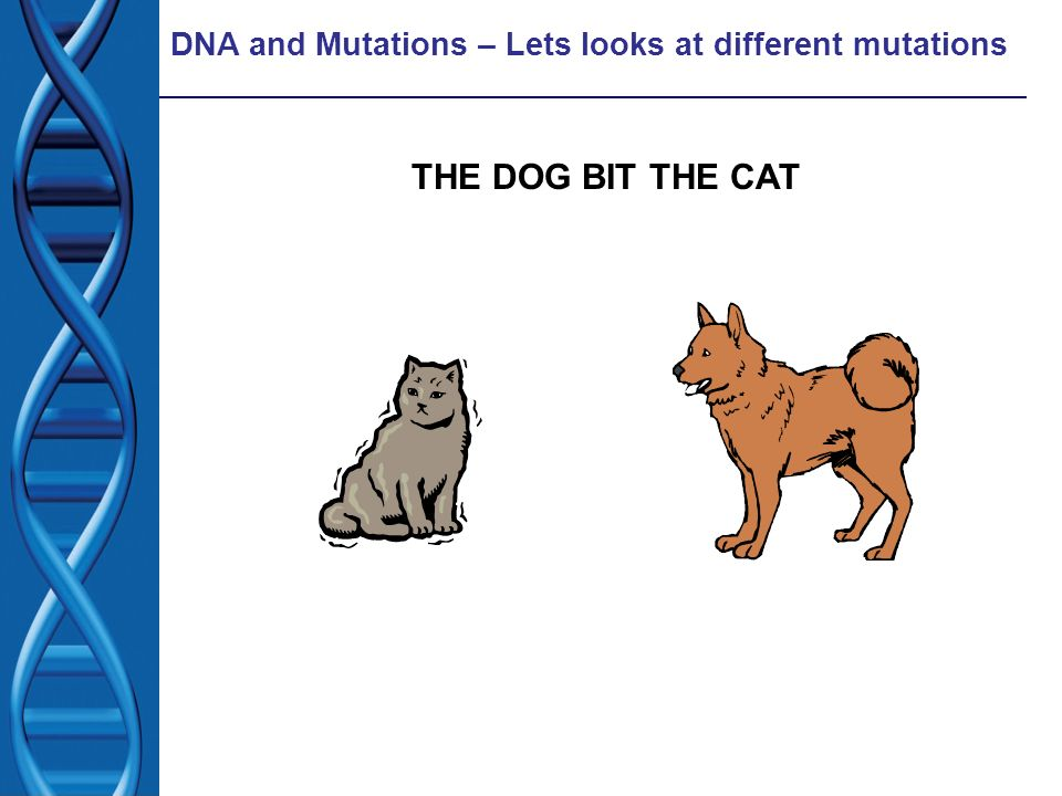 DNA and Mutations – Lets looks at different mutations