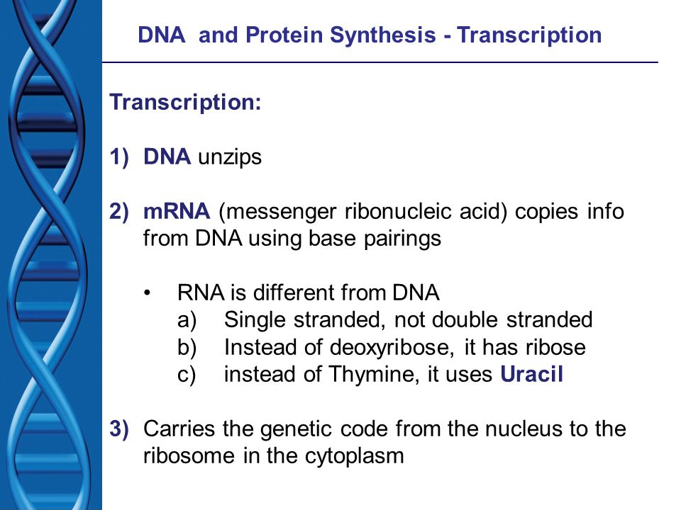 DNA and Protein Synthesis - Transcription
