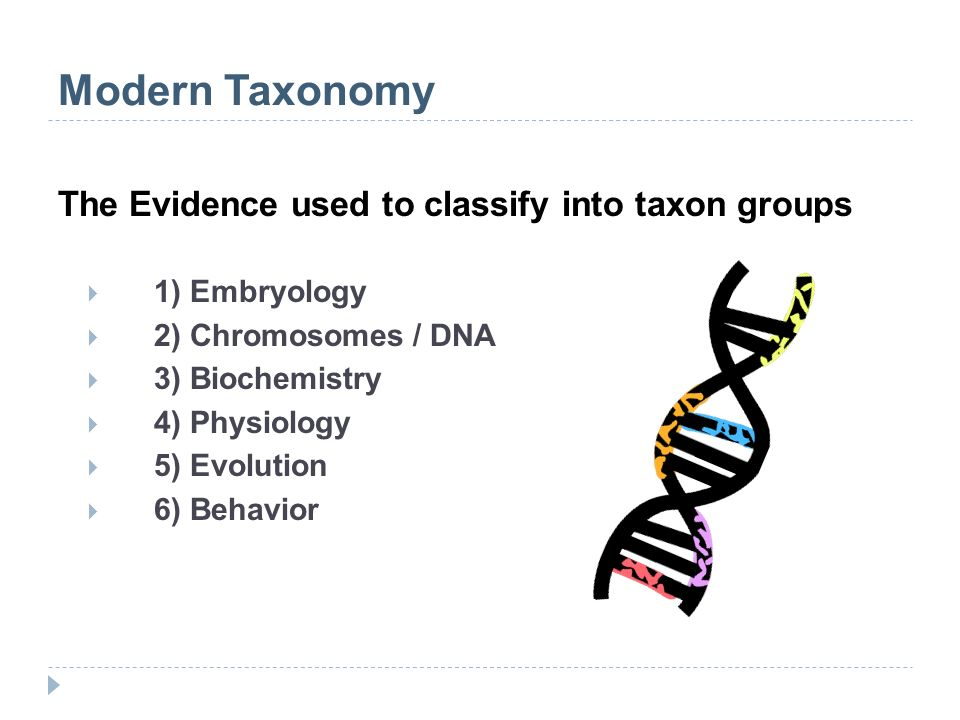 Modern Taxonomy The Evidence used to classify into taxon groups