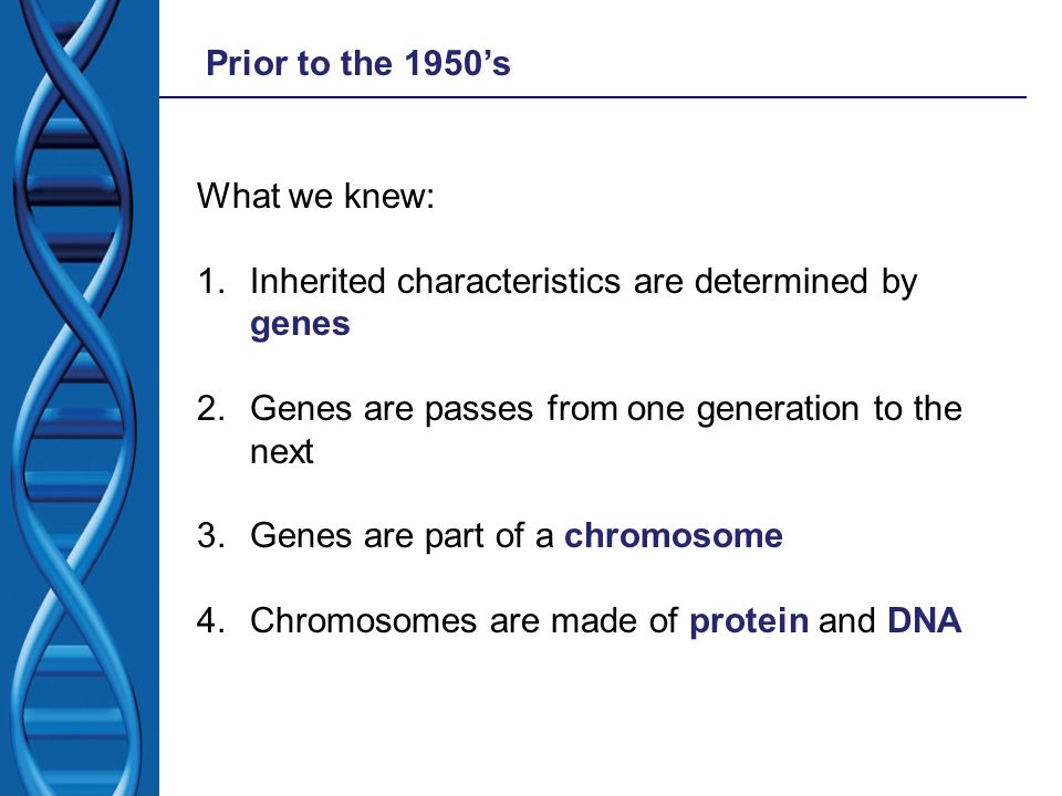 Prior to the 1950's What we knew: Inherited characteristics are determined by genes. Genes are passes from one generation to the next.