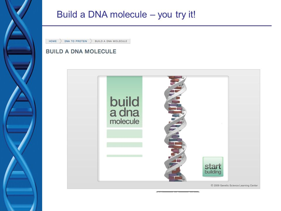 Build a DNA molecule – you try it!