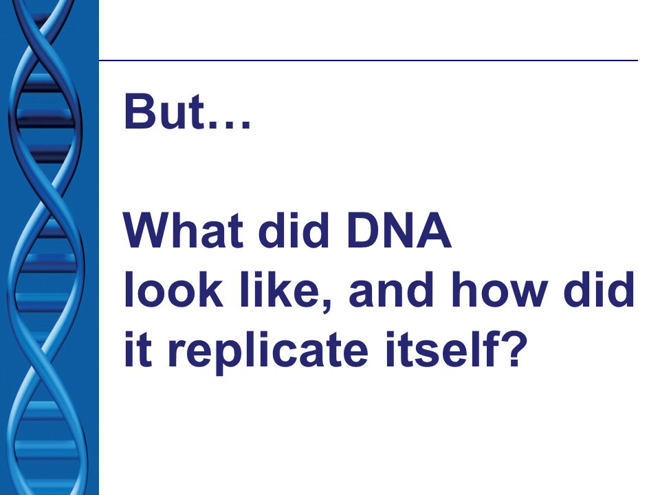 But… What did DNA look like, and how did it replicate itself