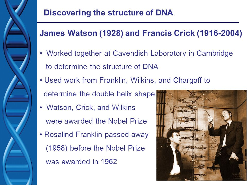 james watson and francis crick unravels the structure of dna