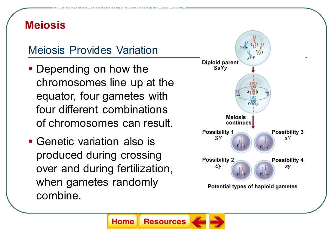Meiosis Provides Variation
