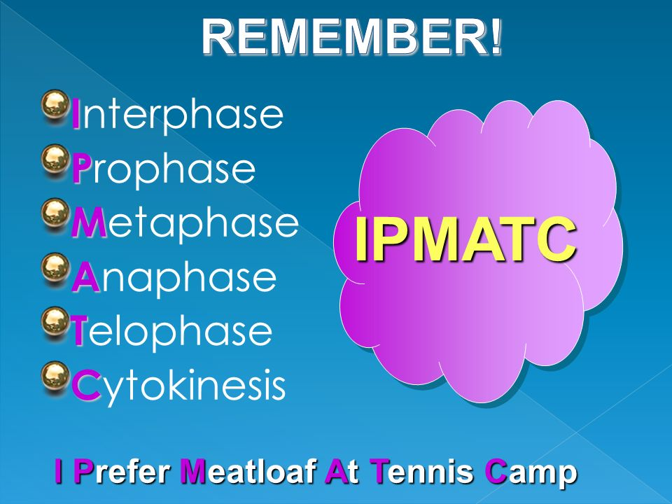 IPMATC REMEMBER! Interphase Prophase Metaphase Anaphase Telophase