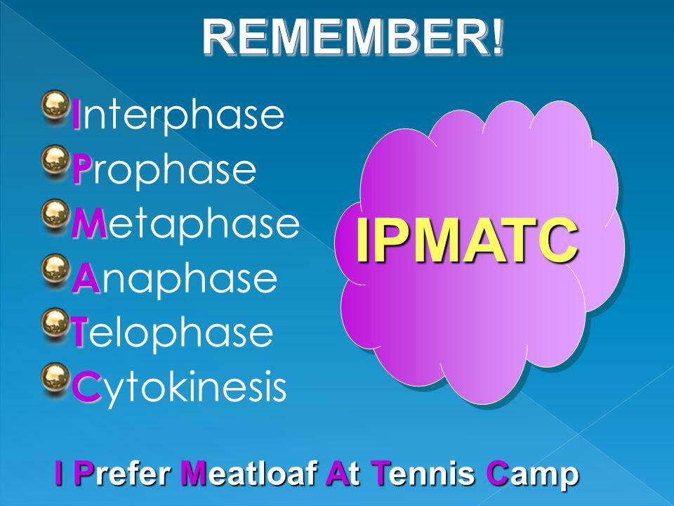 IPMATC REMEMBER! Interphase Prophase Metaphase Anaphase Telophase