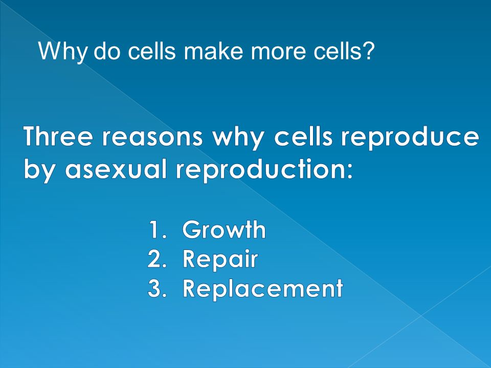 Why do cells make more cells