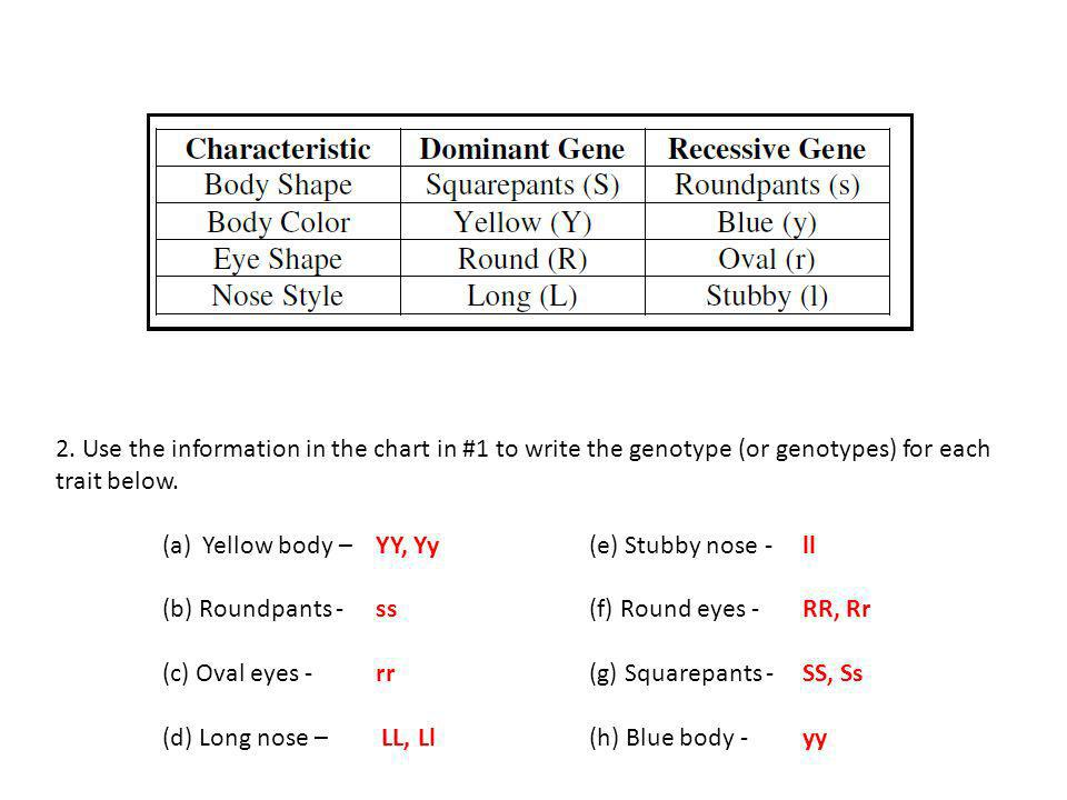 2. Use the information in the chart in #1 to write the genotype (or genotypes) for each trait below.