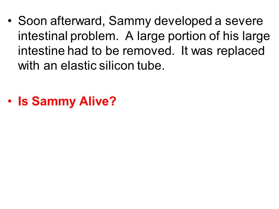 Soon afterward, Sammy developed a severe intestinal problem