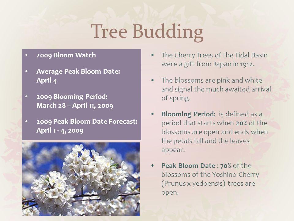 Tree Budding 2009 Bloom Watch Average Peak Bloom Date: April 4