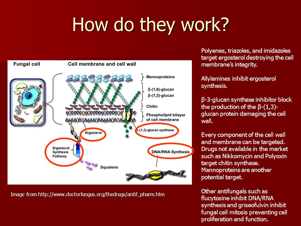 How do they work Polyenes, triazoles, and imidazoles target ergosterol destroying the cell membrane's integrity.