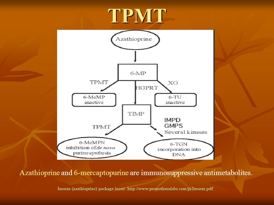 TPMT Azathioprine used in renal transplant and rheumatoid arthritis. 6-MP is used in chemotherapy.