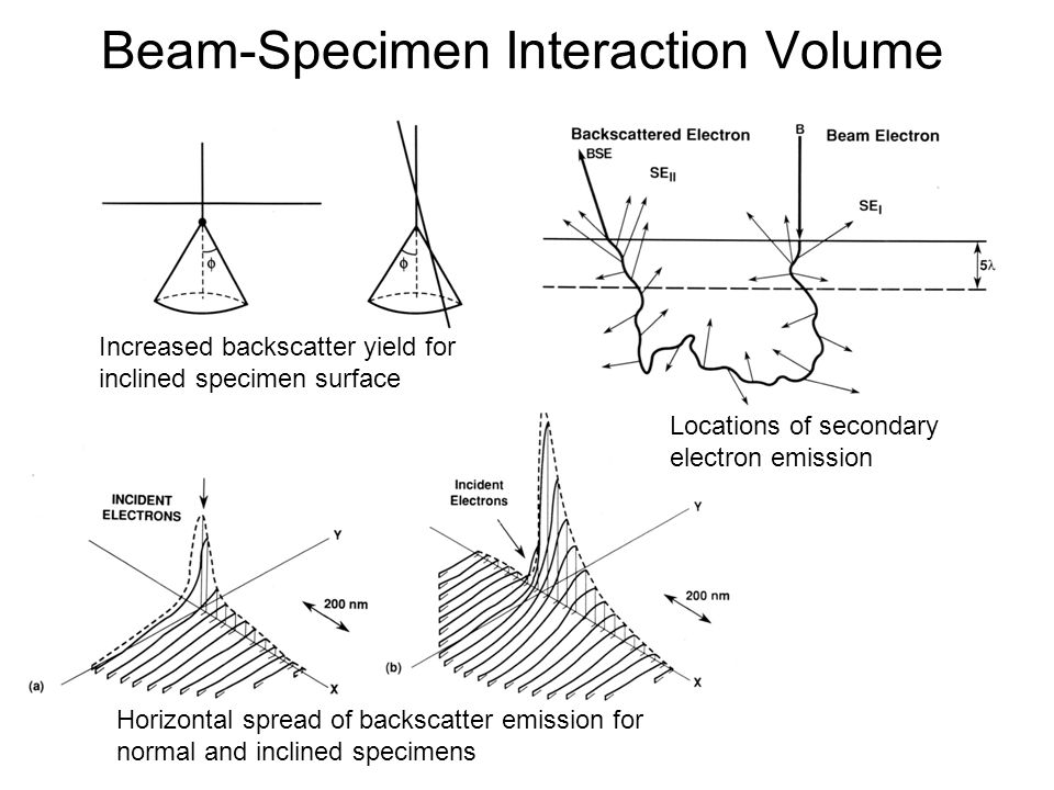 Beam-Specimen Interaction Volume