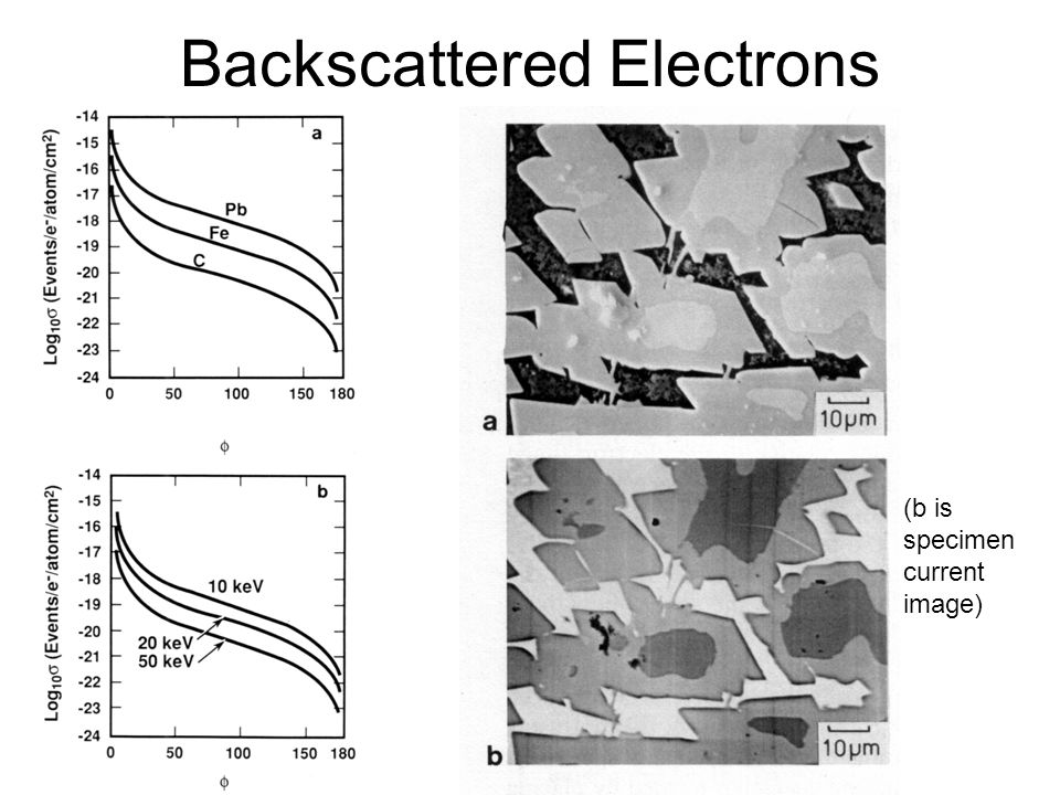 Backscattered Electrons