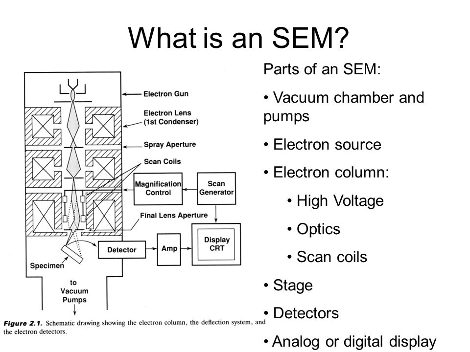 What is an SEM Parts of an SEM: Vacuum chamber and pumps