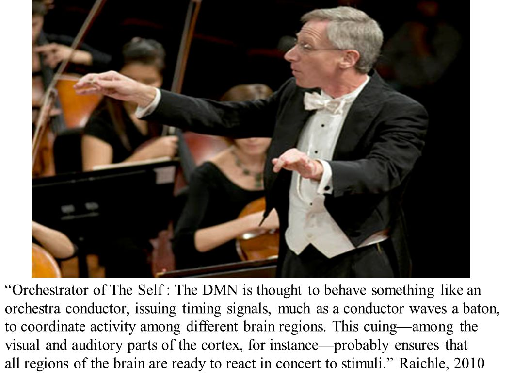 Orchestrator of The Self : The DMN is thought to behave something like an orchestra conductor, issuing timing signals, much as a conductor waves a baton, to coordinate activity among different brain regions. This cuing—among the visual and auditory parts of the cortex, for instance—probably ensures that