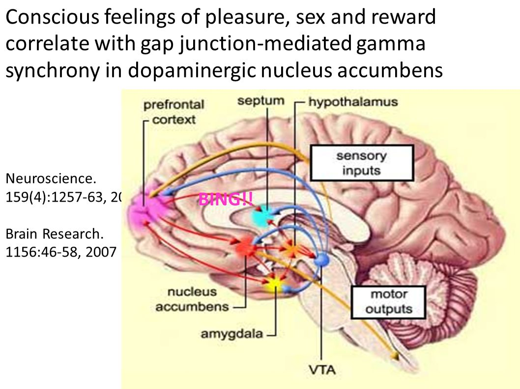 Neuroscience. 159(4):1257-63, 2009. Brain Research. 1156:46-58, 2007.
