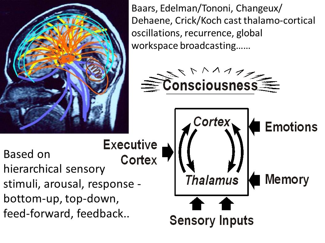 stimuli, arousal, response - bottom-up, top-down,