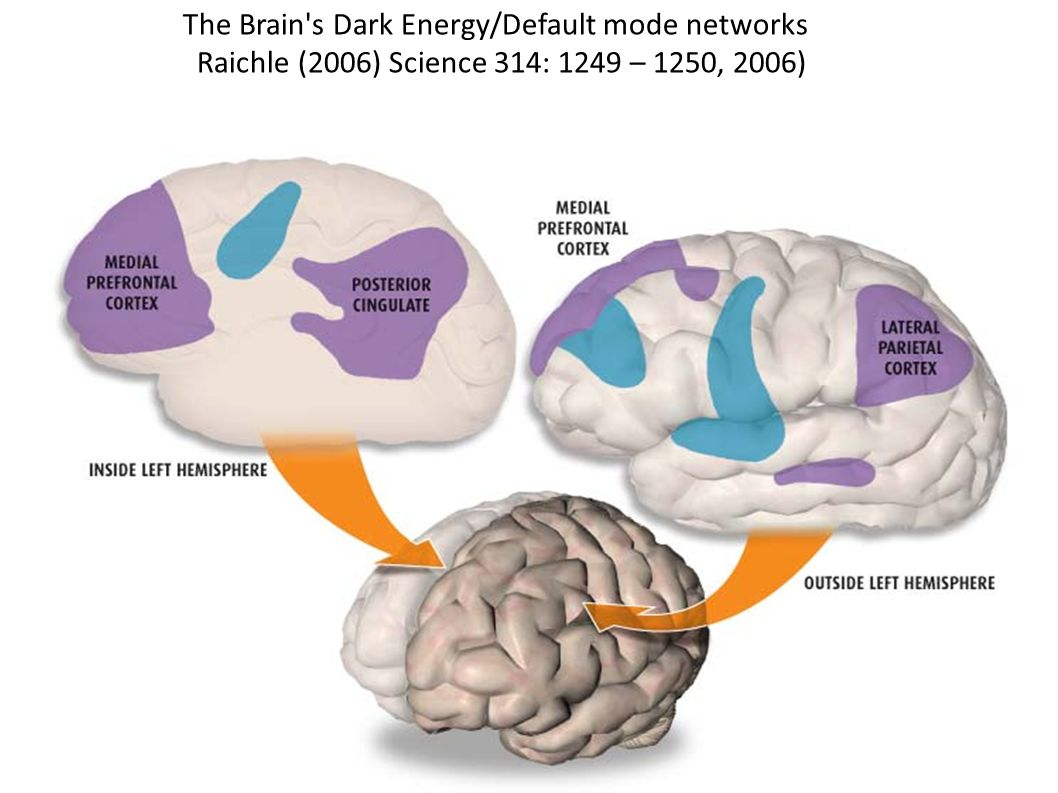 The Brain s Dark Energy/Default mode networks