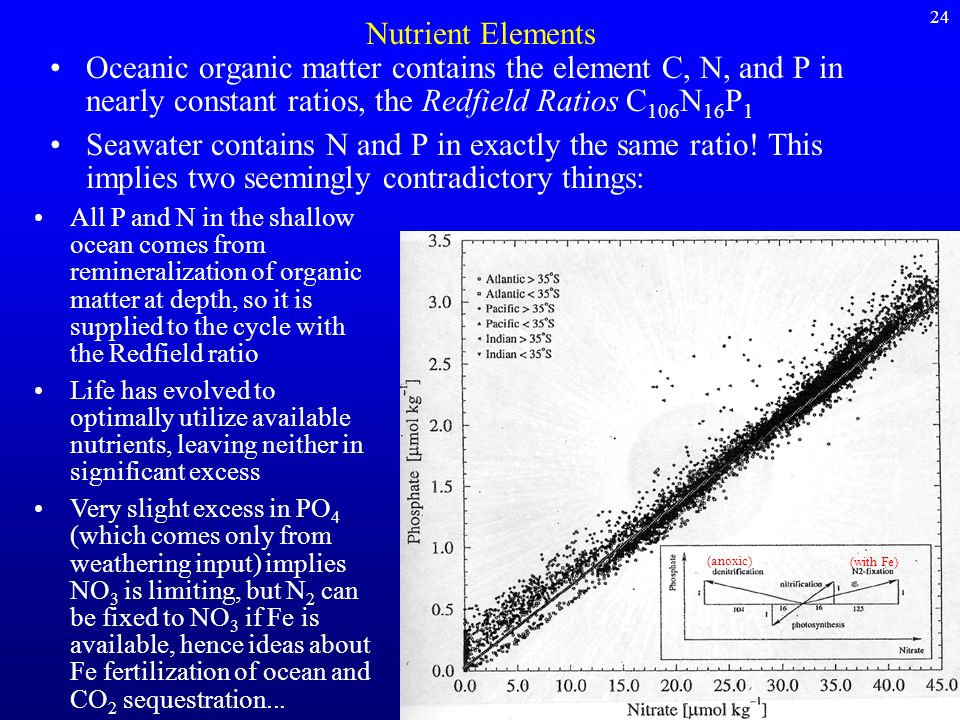 24Nutrient Elements. Oceanic organic matter contains the element C, N, and P in nearly constant ratios, the Redfield Ratios C106N16P1.