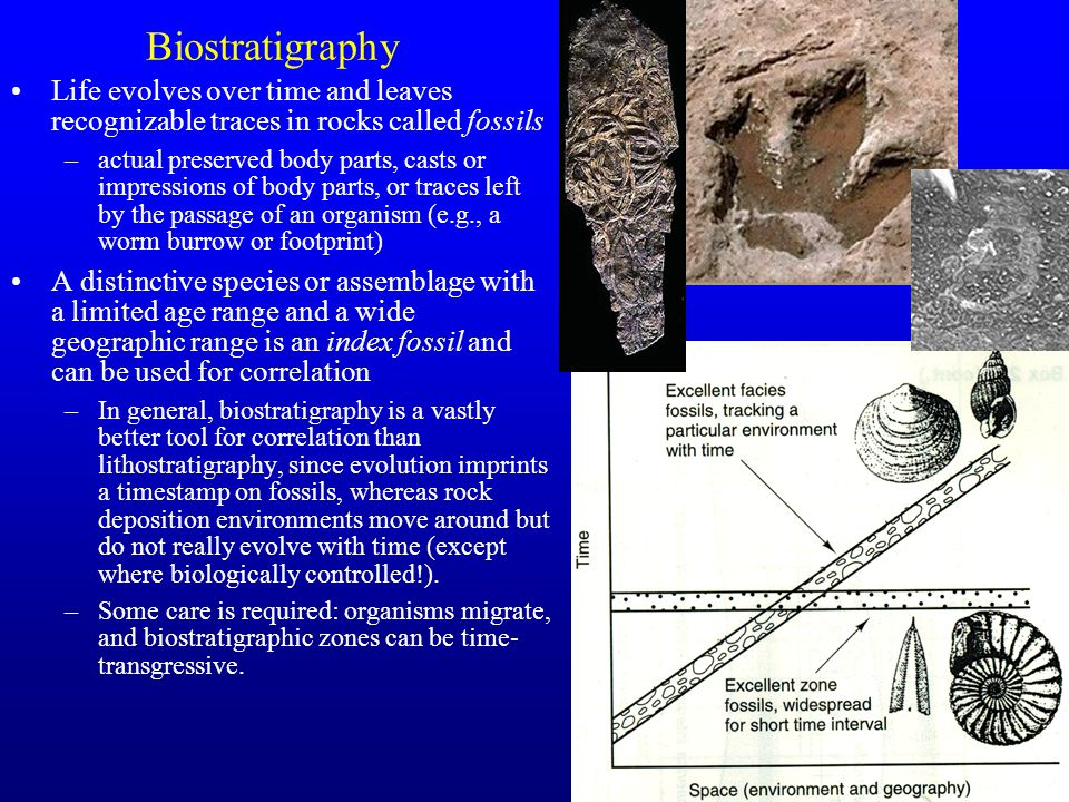 Biostratigraphy Life evolves over time and leaves recognizable traces in rocks called fossils.