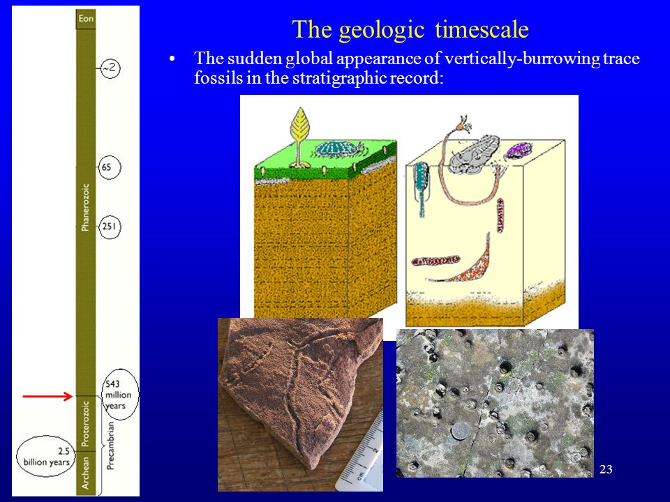 The geologic timescale