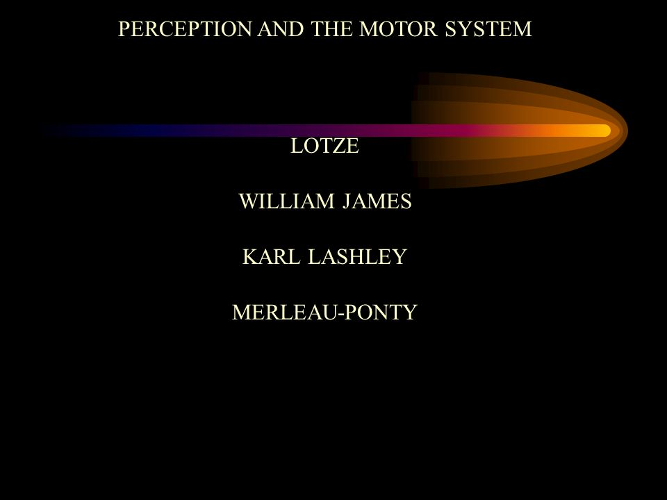 PERCEPTION AND THE MOTOR SYSTEM