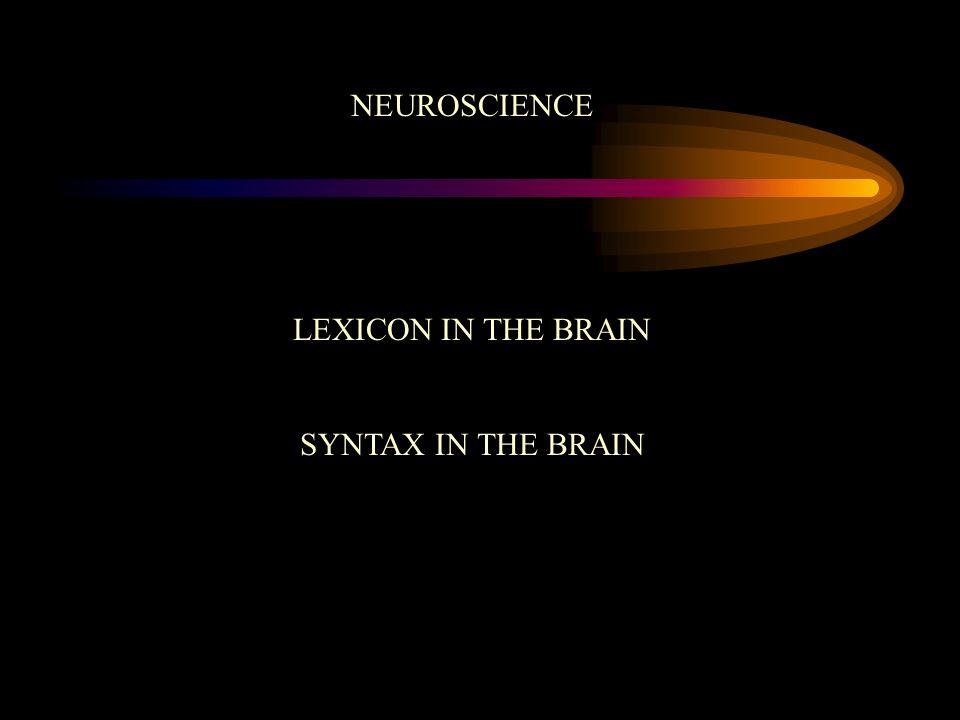 NEUROSCIENCE LEXICON IN THE BRAIN SYNTAX IN THE BRAIN
