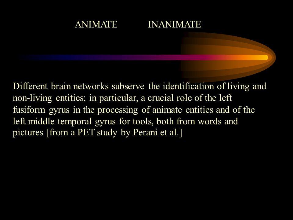 ANIMATE INANIMATE