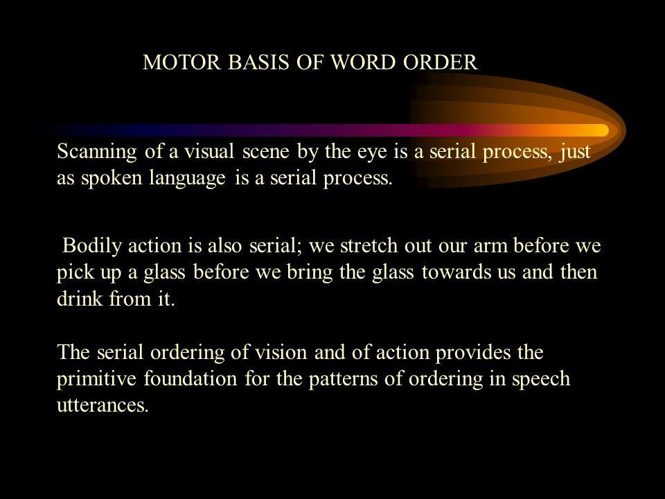 MOTOR BASIS OF WORD ORDER