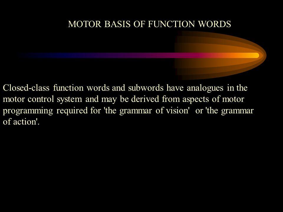 MOTOR BASIS OF FUNCTION WORDS