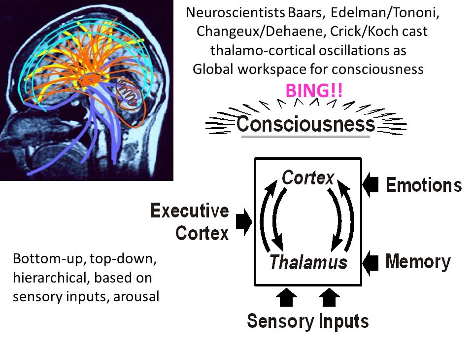 BING!! Neuroscientists Baars, Edelman/Tononi,