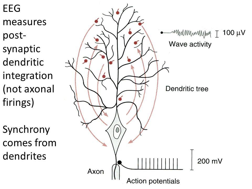 EEG measures post-synaptic