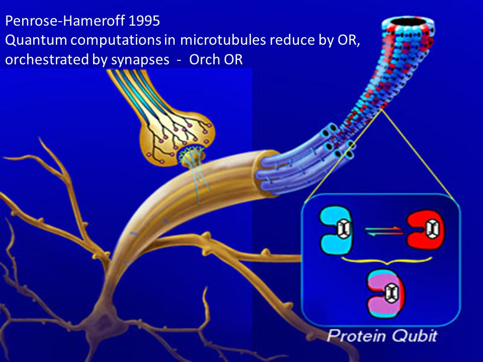 Penrose-Hameroff 1995 Quantum computations in microtubules reduce by OR, orchestrated by synapses - Orch OR.