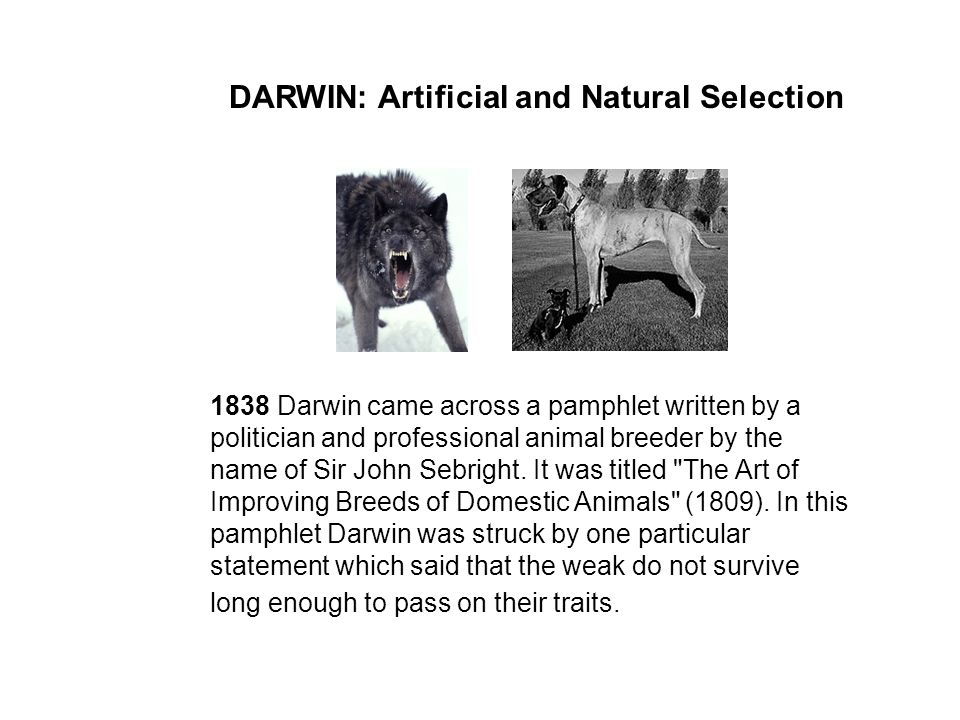 DARWIN: Artificial and Natural Selection