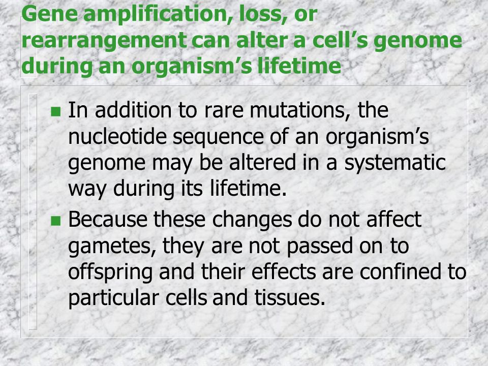 Gene amplification, loss, or rearrangement can alter a cell's genome during an organism's lifetime