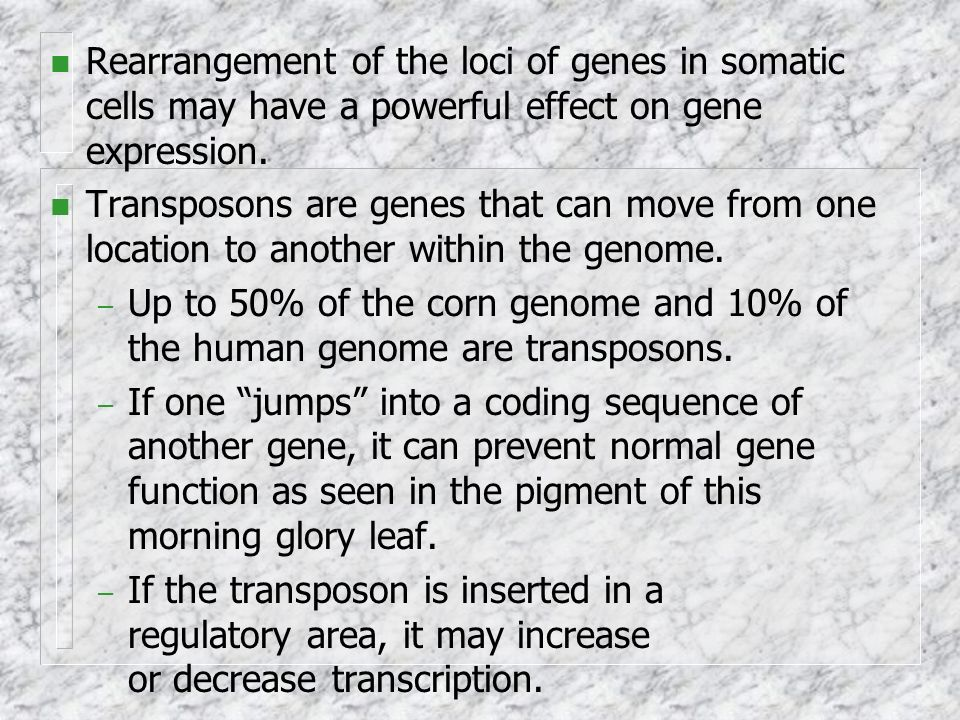 Rearrangement of the loci of genes in somatic cells may have a powerful effect on gene expression.