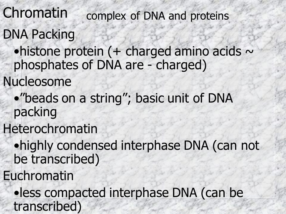 Chromatin complex of DNA and proteins. DNA Packing. •histone protein (+ charged amino acids ~ phosphates of DNA are - charged)
