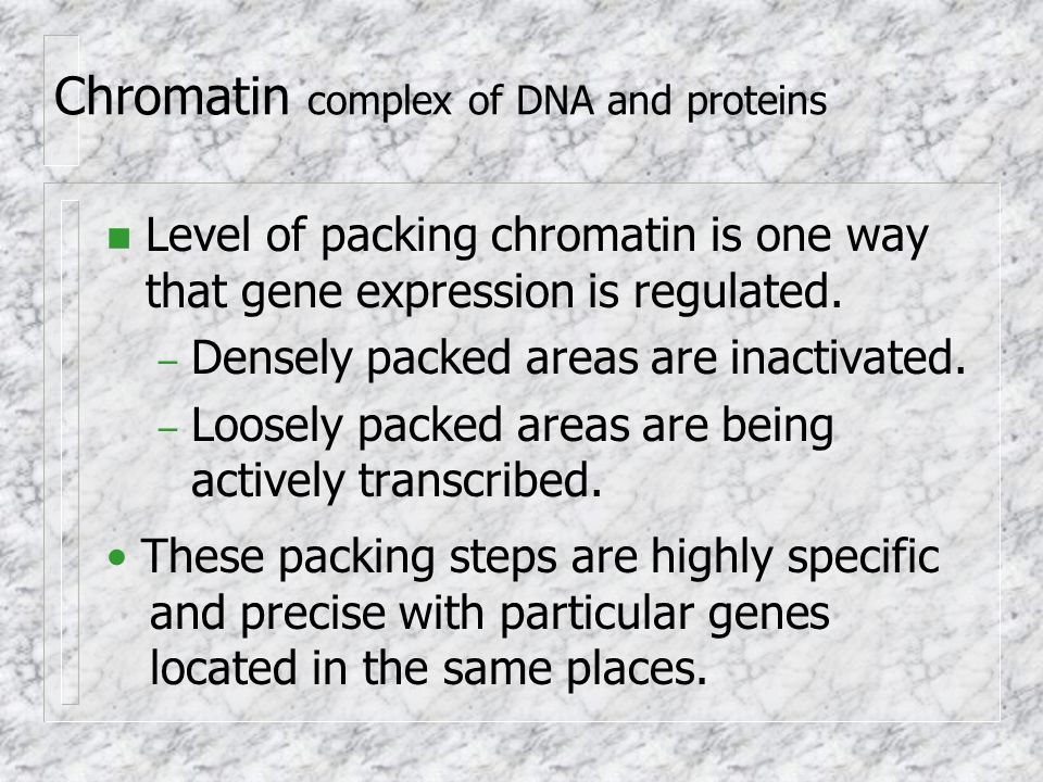 Chromatin complex of DNA and proteins