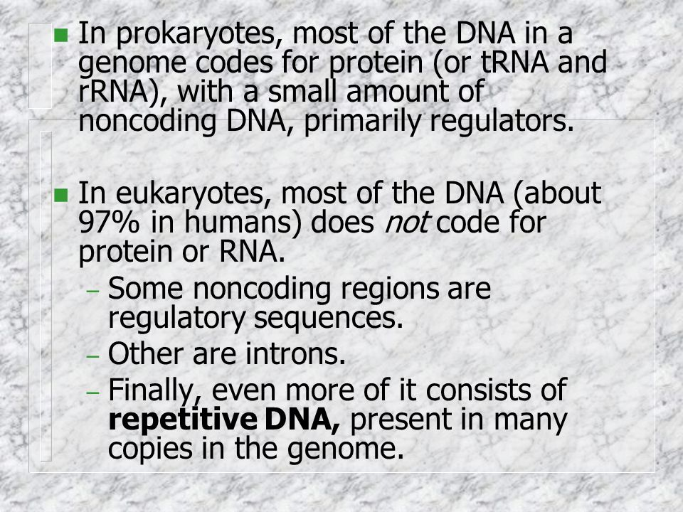 In prokaryotes, most of the DNA in a genome codes for protein (or tRNA and rRNA), with a small amount of noncoding DNA, primarily regulators.