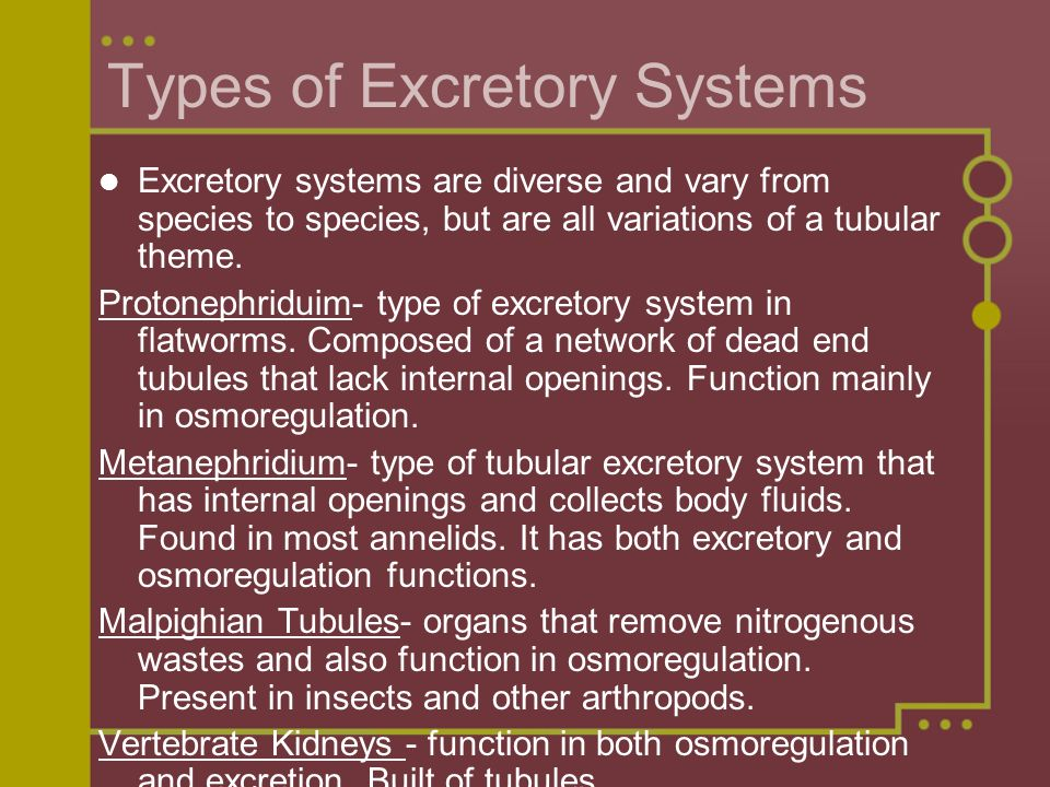 Types of Excretory Systems