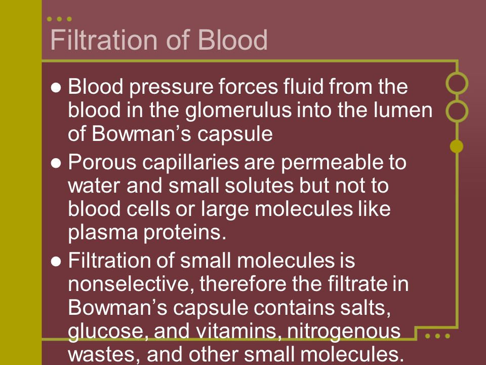 Filtration of Blood Blood pressure forces fluid from the blood in the glomerulus into the lumen of Bowman's capsule.