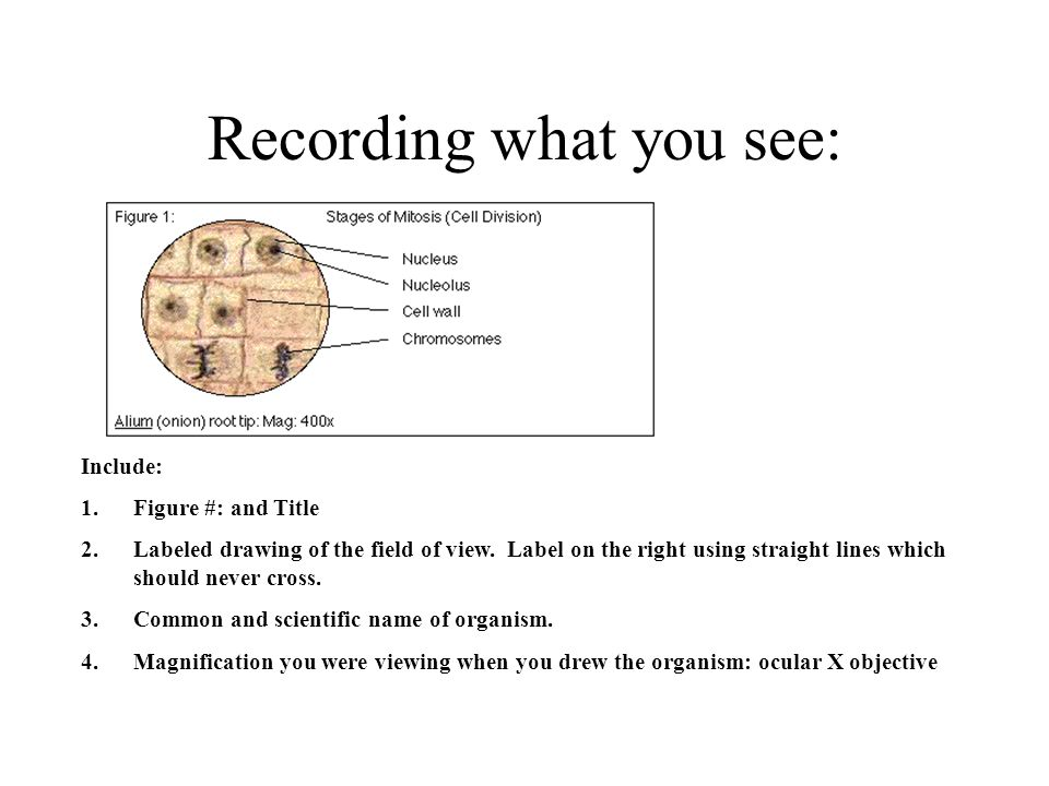 Recording what you see: